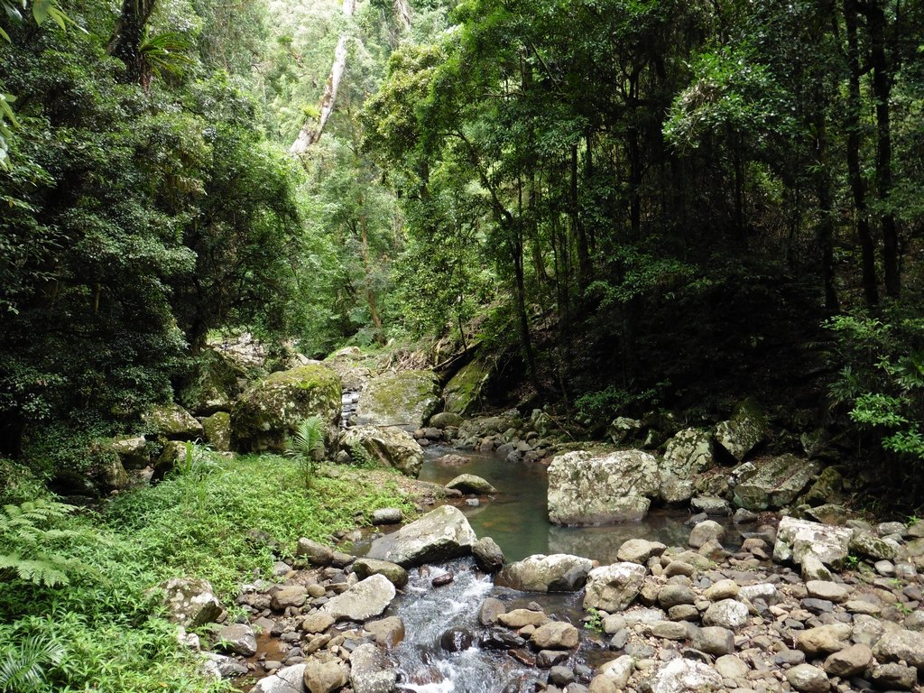Gold Coast: Springbrook National Park